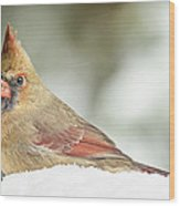Lady Cardinal In The Snow Wood Print