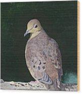 Lady Dove Wood Print