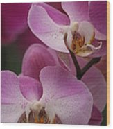 Lady Pink Orchid Wood Print by Valia Bradshaw