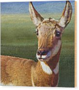 Lady Pronghorn Wood Print