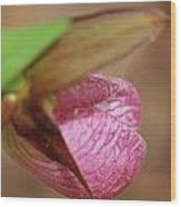 Lady Slipper At Moore State Park Close Up 1 Wood Print