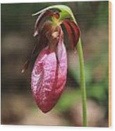 Lady Slipper At Moore State Park Close Up 2 Wood Print
