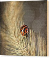 Ladybird Wood Print by Darren Fisher