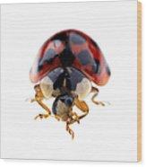 Ladybird Macro Wood Print
