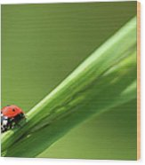Ladybird On Green Leaf Wood Print