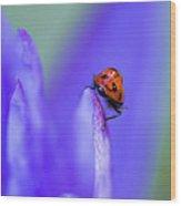 Ladybug Adventure Wood Print