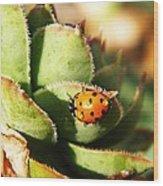 Ladybug And Chick Wood Print