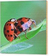 Ladybug And Gentlemanbug Wood Print