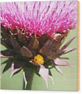 Ladybug And Thistle Wood Print by Marilyn Hunt