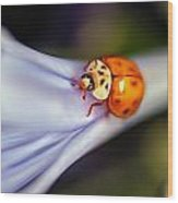 Ladybug Art Wood Print by Tammy Smith