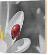 Ladybug Black And White In Colorkey Wood Print
