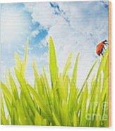 Ladybug Wood Print by Boon Mee