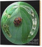 Ladybug Eating Aphids Wood Print