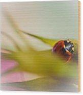 Ladybug II Wood Print