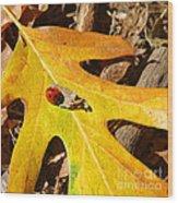 Ladybug Leafing By Diana Sainz Wood Print