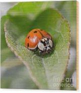 Ladybug Wood Print