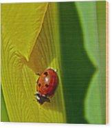 Ladybug Macro Wood Print