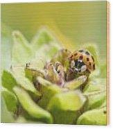 Ladybug On A Bud Wood Print