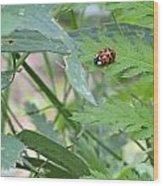 Ladybug On A Leaf Wood Print