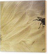 Ladybug On A Sunflower Wood Print