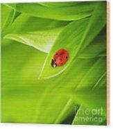 Ladybug On Leaves Wood Print