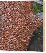 Ladybug Tree Wood Print