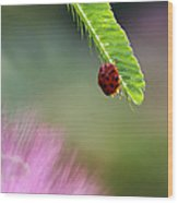 Ladybug With Mimosa Wood Print