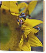 Ladybugs Close Up Wood Print
