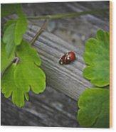 Ladybugs Mating Wood Print