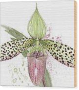 Ladys Slipper - Orchid 16n - Elena Yakubovich Wood Print