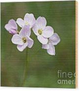 Ladys Smock Or Cuckoo Flower Wood Print