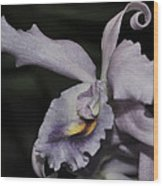 Laeliocattleya Blue Boy 1 Of 2 Wood Print