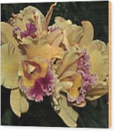 Laeliocattleya Lydia Hubbell Wood Print