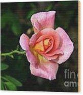 Lafter Hybrid Tea Rose 8990 Wood Print