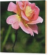 Lafter Tea Rose 8995 Wood Print