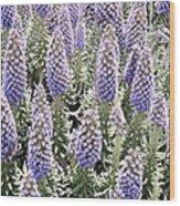 Laguna Beach Flora Wood Print