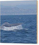 Laguna Whale Wood Print