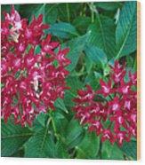 Lahaina Flowers 1 Wood Print