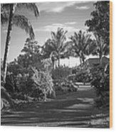 Lahaina Palm Shadows Wood Print