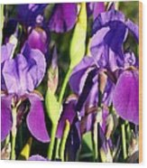 Lake Country Irises Wood Print