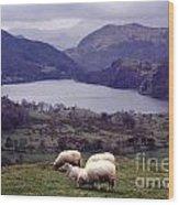Lake Gwynant Snowdonia Wales Wood Print