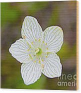 Lake Huron Wildflower Wood Print