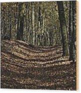 Lake Lansing Walk Wood Print
