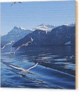 Lake Lucerne Seagulls Wood Print
