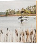 Lake Mattamuskeet Nature Trees And Lants In Spring Time  Wood Print