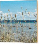 Lake Michigan Shore Grasses Wood Print