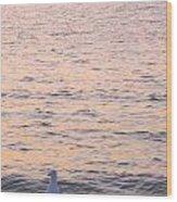 Lake Michigan Sunset With Birds Wood Print