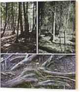 Lake Superior Hiking Trail Wood Print