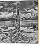 Lake Tenaya Giant Stump Black And White Wood Print