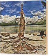 Lake Tenaya Giant Stump Wood Print